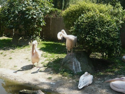 FOTKA - v zoo Jihlava......