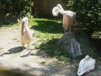 FOTKA - v zoo Jihlava.......