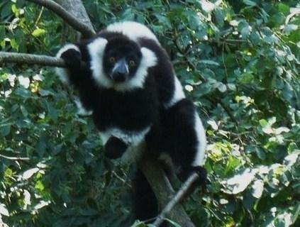 FOTKA - v zoo Jihlava.........