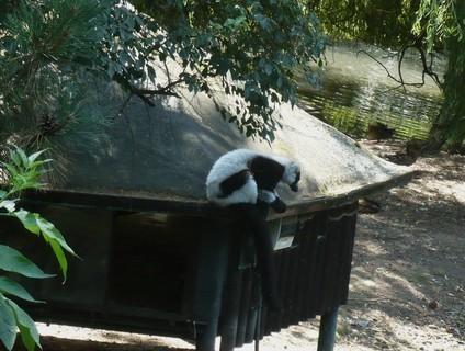 FOTKA - v zoo Jihlava,,,,,,,,