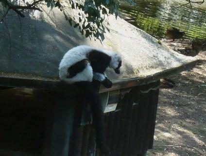 FOTKA - v zoo Jihlavě