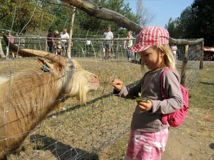 FOTKA - Lenča s kozlem