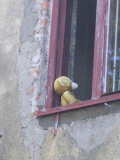 FOTKA - Smutný méďa