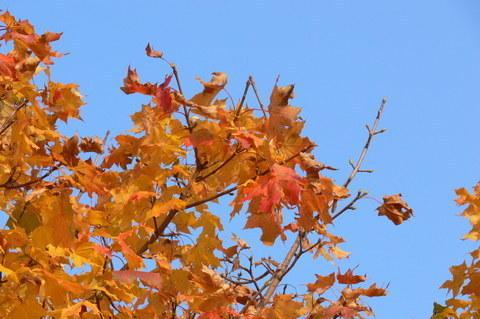 FOTKA - podzim 2006