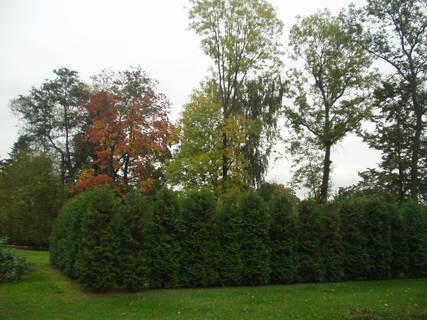 FOTKA - Naše zahrada