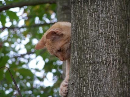 FOTKA - Kočka nebo veverka :)