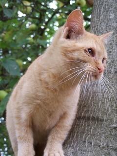 FOTKA - Koťátko na stromě