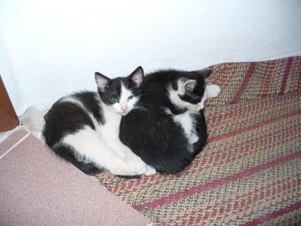 FOTKA - Dvě koťátka