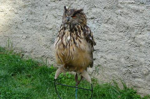 FOTKA - Ptactvo u hradu Veve��
