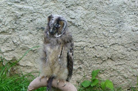 FOTKA - Ptactvo na Veveří