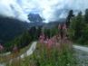 Květy a hory II