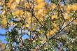podzim,