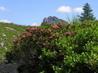 Květy a hory III