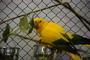 Papoušek 44