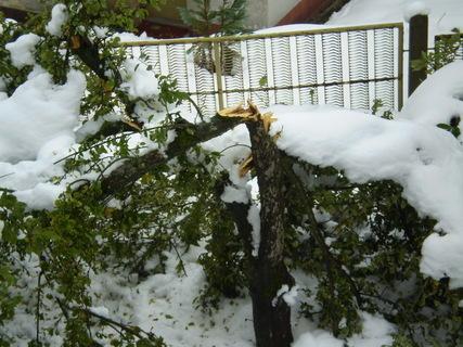 FOTKA - Důsledky předčasné zimy