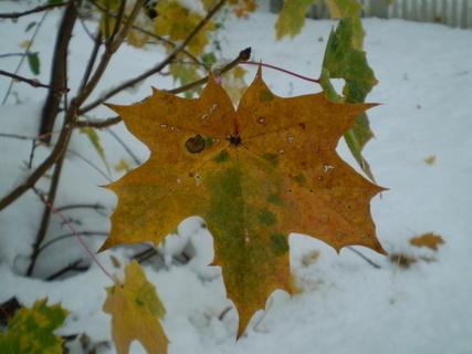 FOTKA - List se sněhem