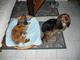 Bára a Lucky na chatě