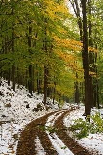 FOTKA - Tento způsob podzimu...