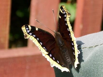 FOTKA -  Motýl na zahradě