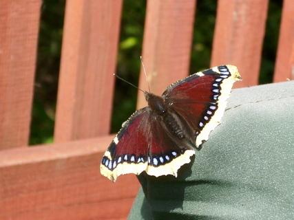 FOTKA - Ještě jednou motýl