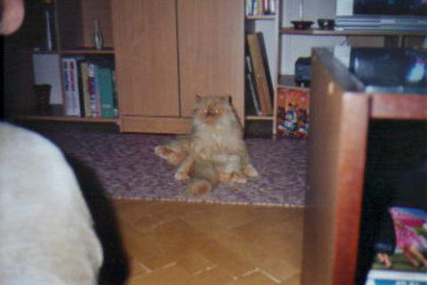 FOTKA - Sedí se mi dobře...