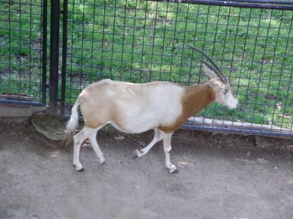 FOTKA - .antilopa.