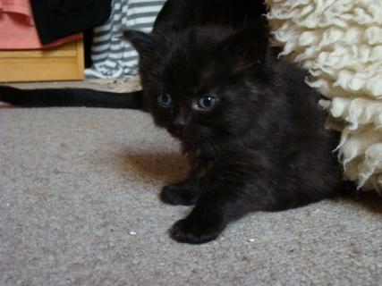 FOTKA - černá malá slečna