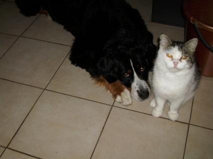 FOTKA - pejsek a kočička