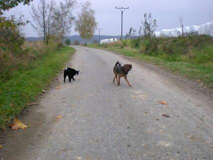 FOTKA - dnešní procházka