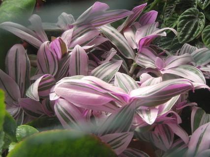 FOTKA - skleníková krása
