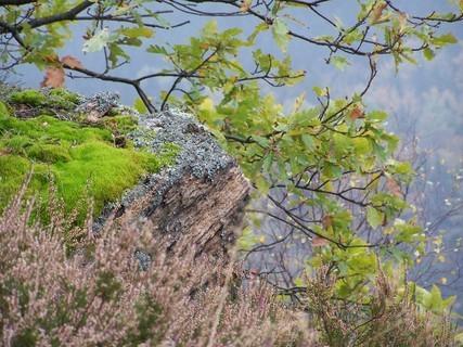 FOTKA - Podzim ve skalách