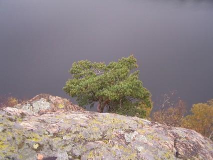 FOTKA - Borovice ve skalách