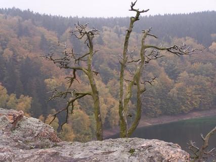 FOTKA - Suchý strom ve skalaách