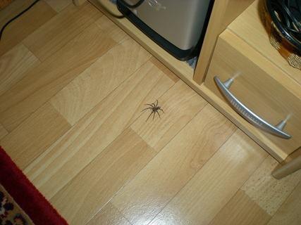 FOTKA - pomóc mám pod PC pavouka!