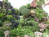 Zákoutí zahrady