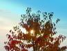 Slunce v listí