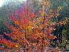 Malovaný podzim
