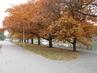 Stromy obklopené dlažbou