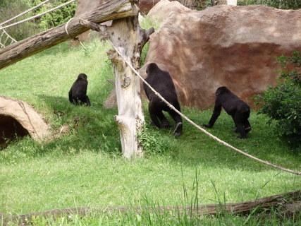 FOTKA - gorily venku