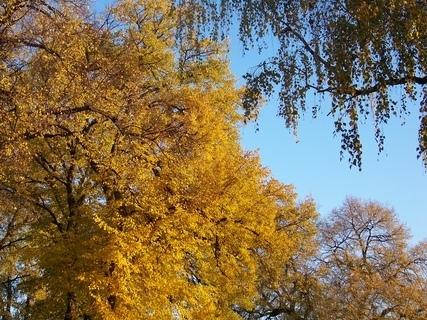 FOTKA - osvětlené stromy sluncem