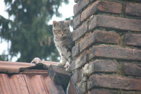 FOTKA - Kočka za komínem 2