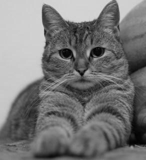 FOTKA - Jsem Listr a ráda se fotím