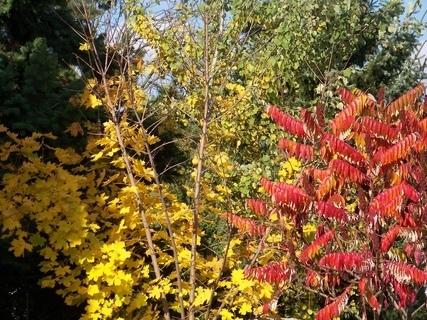 FOTKA - a další podzimní foto
