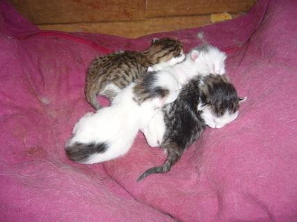 FOTKA - Čerstvá koťata,