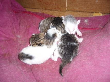 FOTKA - Čerstvá koťata,,