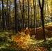zlatý poklad v lese