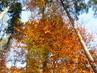 Příroda - les
