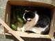 pomocník na zahradě