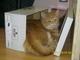 Škuba v krabici