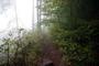 Jestřebky-mlha